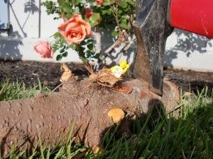 Bubba's Tree